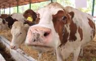 عزيز اخنوش سيفتتح المعرض المهني لتربية الماشية بسيدي بنور يوم الخميس